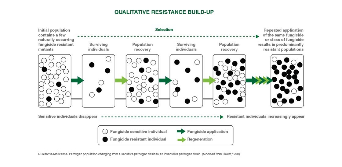 Qualitative pathogen population diagram