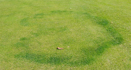 Type II Fairy Ring Disease, image from UK