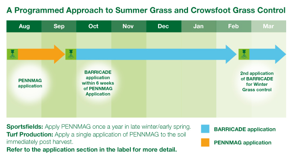 Programmed approach Summer Grass Crowsfoot Grass
