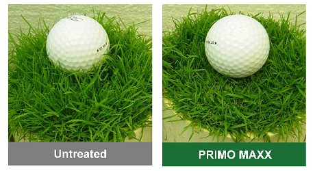 PRIMO MAXX reduced mowing