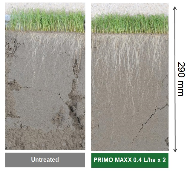 PRIMO MAXX superior rooting and drought resistance