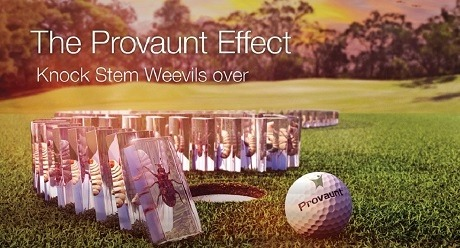 The PROVAUNT Effect