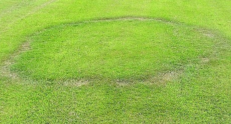 Type I Fairy Ring Disease, image from UK