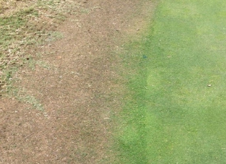 Spinner damage Bentgrass