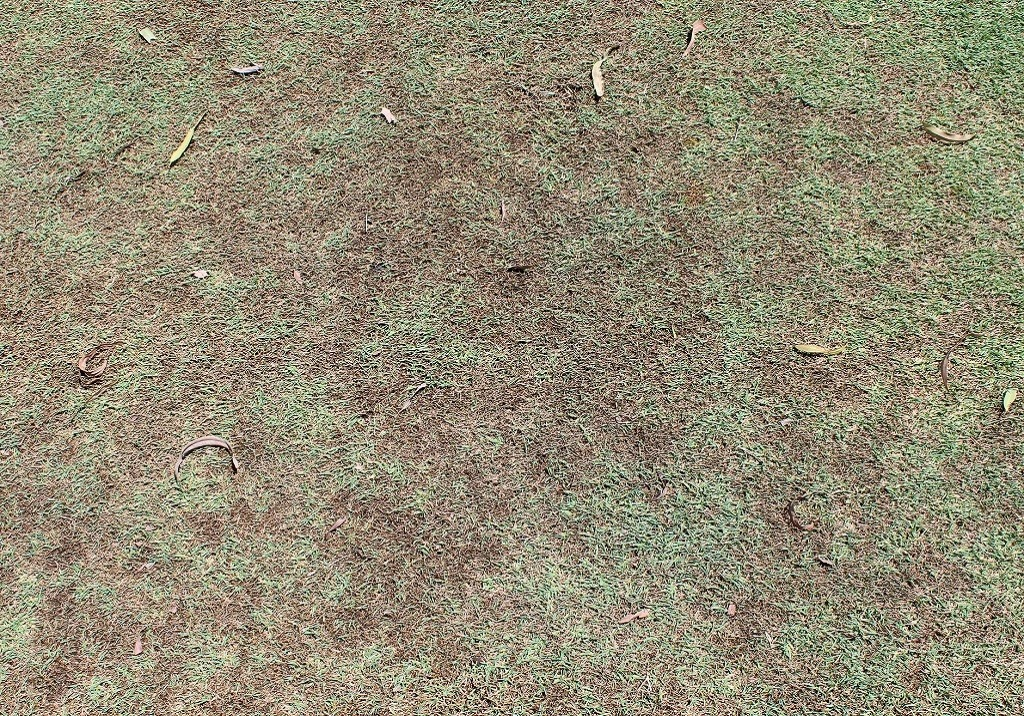 Leaf Spot Damage