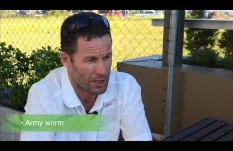 Acelepryn Insecticide - Gold Coast Council - Peter Apps
